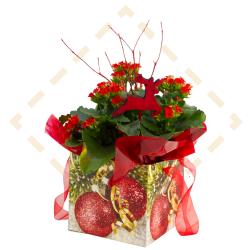 """6"""" Kalanchoe Ornament Giftbag"""