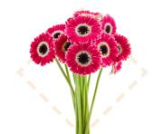 Piccolini Flowers™