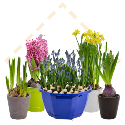 Coming Soon - Eurobulbs