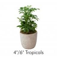 Tropicals