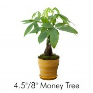 Money Trees